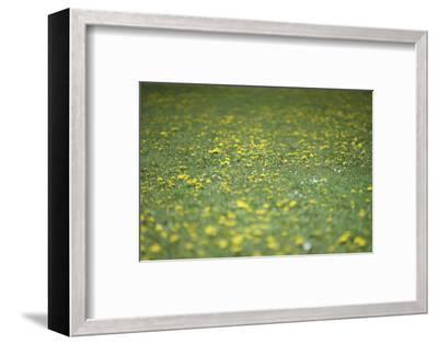 Flower meadow-Benjamin Engler-Framed Photographic Print