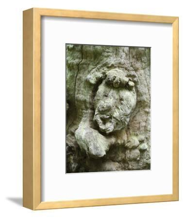forest spirit, tree face in old beech, Urwald Sababurg, Reinhardswald, Hessia, Germany-Michael Jaeschke-Framed Photographic Print