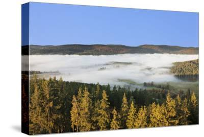 Morning fog over the Schluchsee, Black Forest, Baden-Wurttemberg, Germany-Markus Lange-Stretched Canvas Print