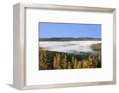 Morning fog over the Schluchsee, Black Forest, Baden-Wurttemberg, Germany-Markus Lange-Framed Photographic Print