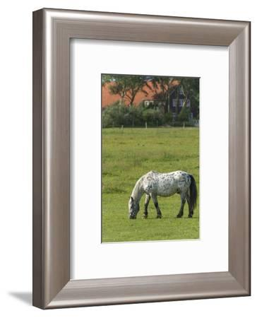 Germany, Lower Saxony, East Friesland, Langeoog, horse on the pasture.-Roland T. Frank-Framed Photographic Print