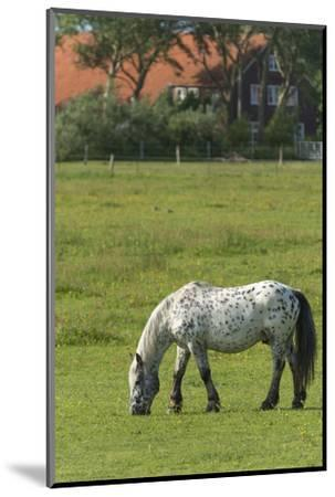 Germany, Lower Saxony, East Friesland, Langeoog, horse on the pasture.-Roland T. Frank-Mounted Photographic Print