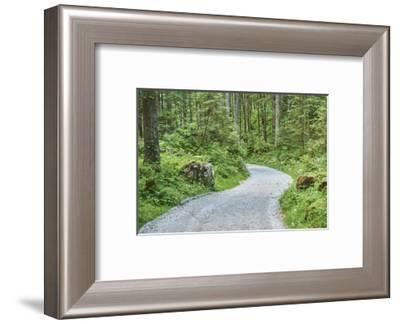 Scenery, forest way, spruce forest, Picea abies, spring-David & Micha Sheldon-Framed Photographic Print
