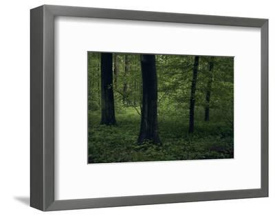 Forest in spring, dark, old trees-Axel Killian-Framed Photographic Print