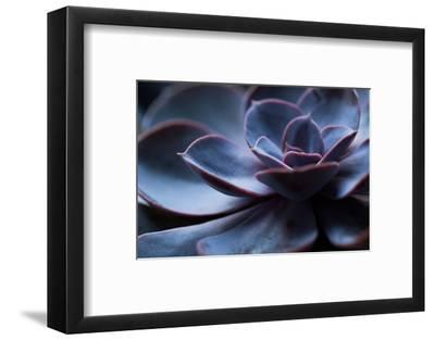 Succulent Plant in Close-up-Paivi Vikstrom-Framed Photographic Print