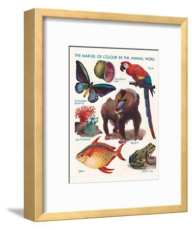 'The Marvel of Colour in the Animal World', 1935-Unknown-Framed Giclee Print