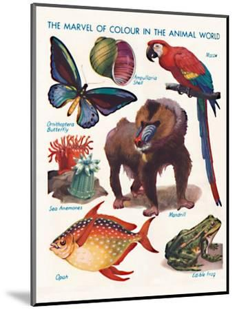 'The Marvel of Colour in the Animal World', 1935-Unknown-Mounted Giclee Print