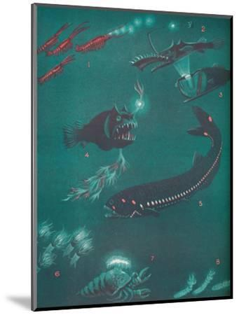 'Life Half a Mile Below The Sea's Surface', 1935-Unknown-Mounted Giclee Print