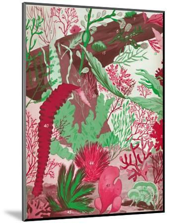'A Collection of Over Fifty Species of Red, Green and Brown Seaweeds', 1935-Unknown-Mounted Giclee Print