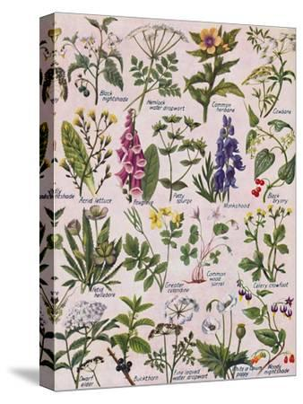 'Poisonous Plants Found in the British Isles', 1935-Unknown-Stretched Canvas Print