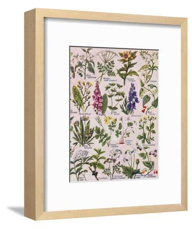 'Poisonous Plants Found in the British Isles', 1935-Unknown-Framed Giclee Print