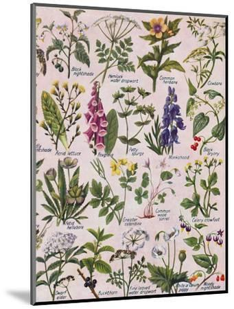 'Poisonous Plants Found in the British Isles', 1935-Unknown-Mounted Giclee Print
