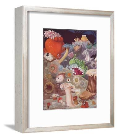 'Over Fifty Varieties of Sea Anemones', 1935-Unknown-Framed Giclee Print