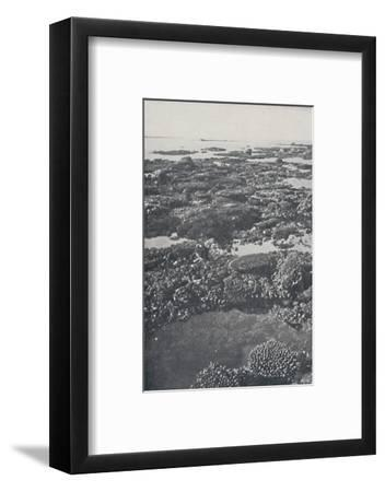 'Great Barrier Reef', 1924-Unknown-Framed Photographic Print