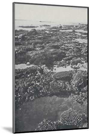 'Great Barrier Reef', 1924-Unknown-Mounted Photographic Print