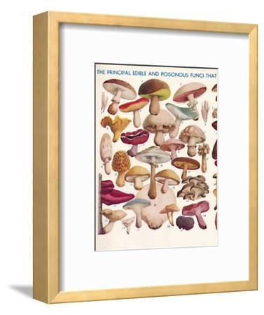 'The Principal Edible and Poisonous Fungi In The British Isles', 1935-Unknown-Framed Giclee Print