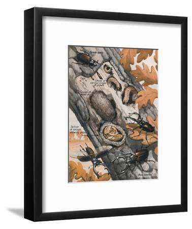 'The Story of the Largest British Beetle', 1935-Unknown-Framed Giclee Print