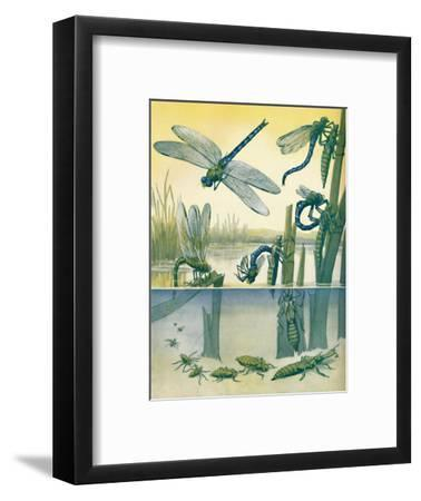 'The Beautiful Dragonfly's Life Story', 1935-Unknown-Framed Giclee Print