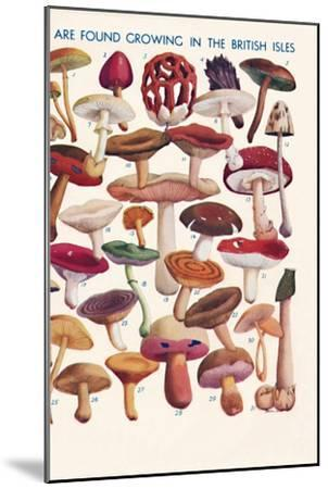 'The Principal Edible and Poisonous Fungi In The British Isles', 1935-Unknown-Mounted Giclee Print