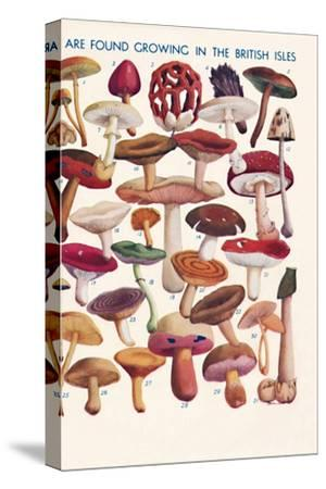 'The Principal Edible and Poisonous Fungi In The British Isles', 1935-Unknown-Stretched Canvas Print