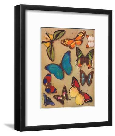 'The Marvellous Colour of the Butterflies', 1935-Unknown-Framed Giclee Print