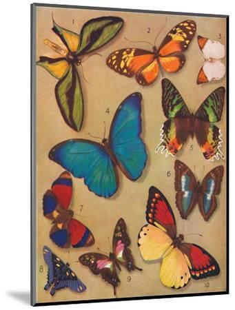'The Marvellous Colour of the Butterflies', 1935-Unknown-Mounted Giclee Print