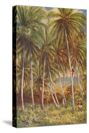 'Coco-nut Palms', 1924-Unknown-Stretched Canvas Print