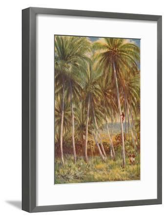 'Coco-nut Palms', 1924-Unknown-Framed Giclee Print