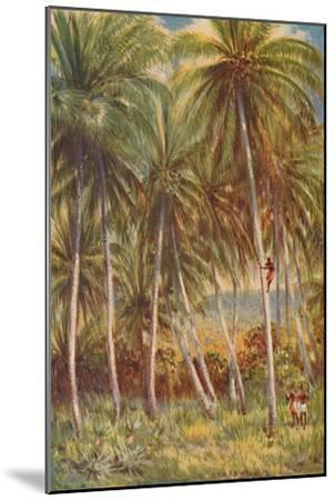 'Coco-nut Palms', 1924-Unknown-Mounted Giclee Print