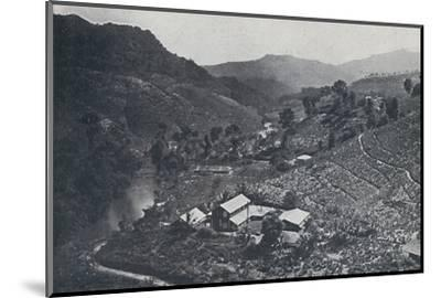 'Cingalese Tea Plantation', 1924-Unknown-Mounted Photographic Print