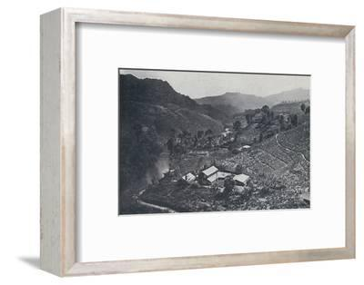 'Cingalese Tea Plantation', 1924-Unknown-Framed Photographic Print