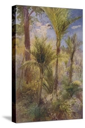 'New Zealand Forest', 1924-Unknown-Stretched Canvas Print