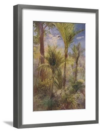 'New Zealand Forest', 1924-Unknown-Framed Giclee Print