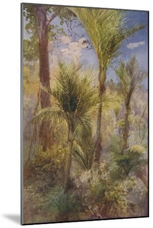 'New Zealand Forest', 1924-Unknown-Mounted Giclee Print