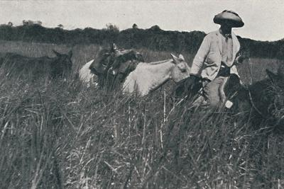 'Travel on the Pampas', 1916-Unknown-Framed Photographic Print