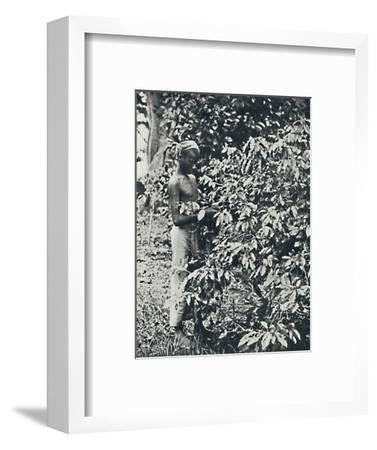 'Picking Coffee', 1916-Unknown-Framed Photographic Print