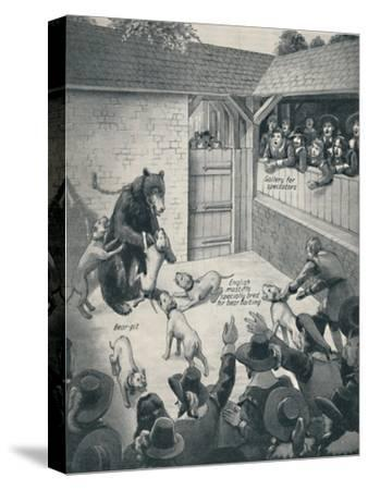 'Bear-Baiting in a Stuart Bear Pit', c1934-Unknown-Stretched Canvas Print