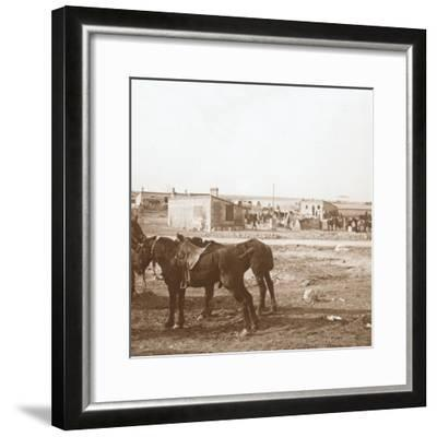Horses, Somme-Tourbe, northern France, c1914-c1918-Unknown-Framed Photographic Print