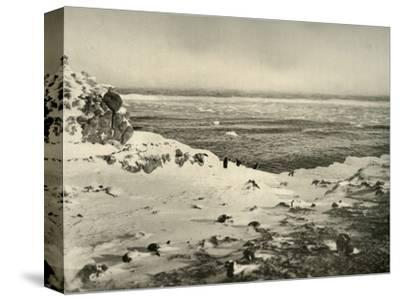 'The Last of the Penguins Just Before Their Migration in March', c1908, (1909)-Unknown-Stretched Canvas Print