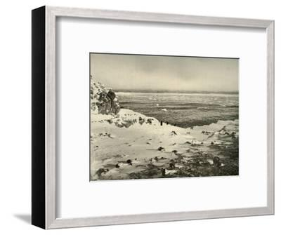 'The Last of the Penguins Just Before Their Migration in March', c1908, (1909)-Unknown-Framed Photographic Print