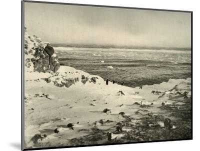 'The Last of the Penguins Just Before Their Migration in March', c1908, (1909)-Unknown-Mounted Photographic Print