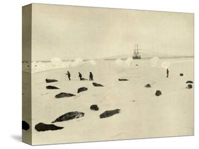 'The Nimrod at Pram Point on March 4, 1909'-Unknown-Stretched Canvas Print