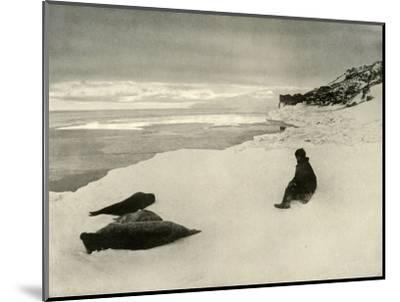 'Seals at the Ice-Edge', c1908, (1909)-Unknown-Mounted Photographic Print