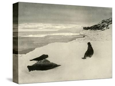 'Seals at the Ice-Edge', c1908, (1909)-Unknown-Stretched Canvas Print