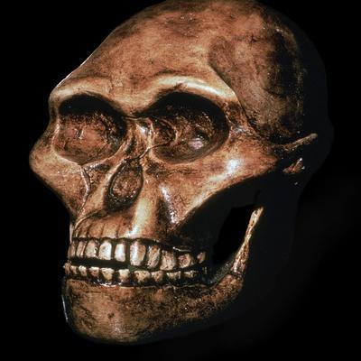 Skull of Australopithecus Africanus-Unknown-Framed Giclee Print