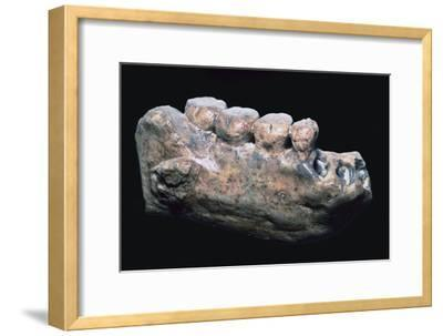 Jaw and teeth of Java Man-Unknown-Framed Giclee Print