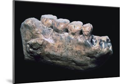 Jaw and teeth of Java Man-Unknown-Mounted Giclee Print