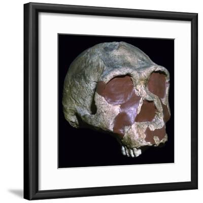 Skull of Homo Erectus-Unknown-Framed Giclee Print