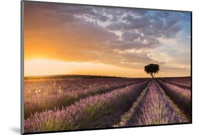 DESTINATION LAVENDER-Fran Ros-Mounted Photographic Print