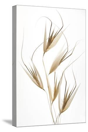 Delicacy of nature-Thierry Lagandré (Transgressed-Stretched Canvas Print